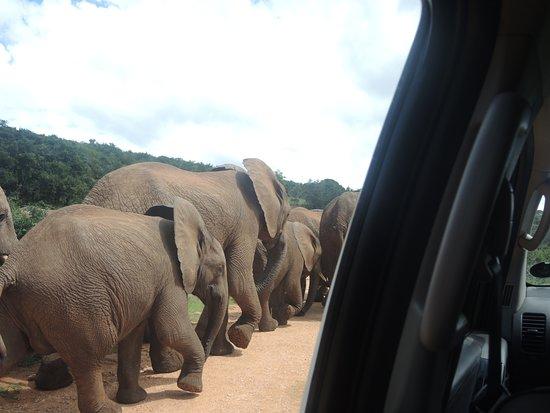 Addo Elephant National Park, Sudáfrica: So close very beautiful