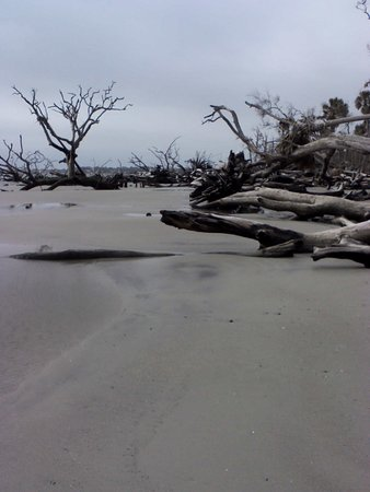 "Hunting Island State Park Campground: Remote area of beach, ""The Boneyard"""
