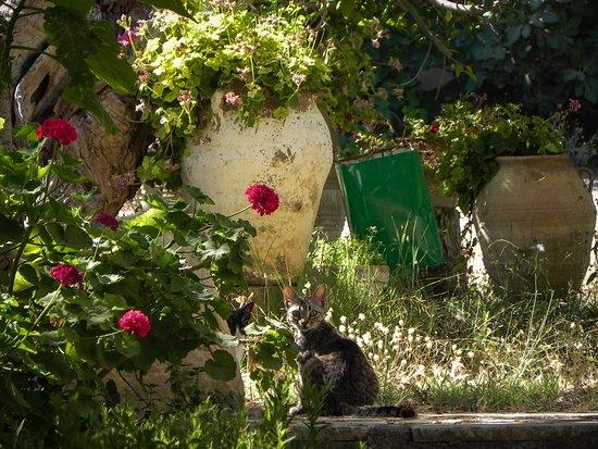 Stavromenos, Grekland: Garten und Besucher ;-)