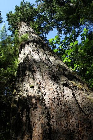 Cathedral Grove: Love this pic.