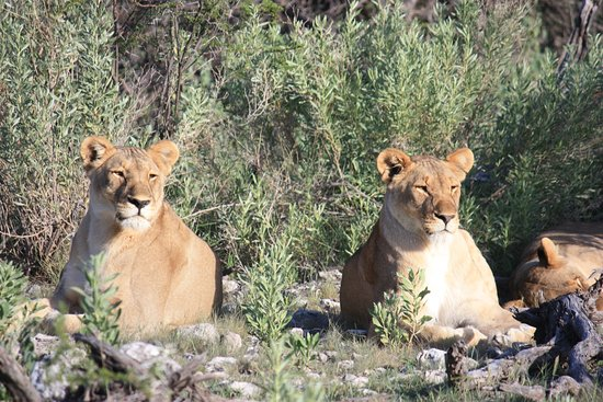 Etosha National Park ภาพถ่าย