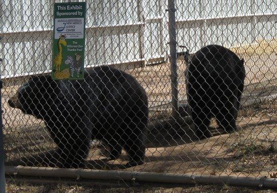 Hillcrest Park Zoo: bear