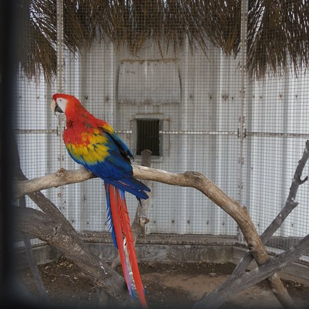 Hillcrest Park Zoo: bird