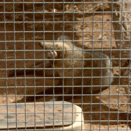 Hillcrest Park Zoo: animal