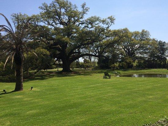 Darrow, Louisiane : Gardens with incredible oak trees
