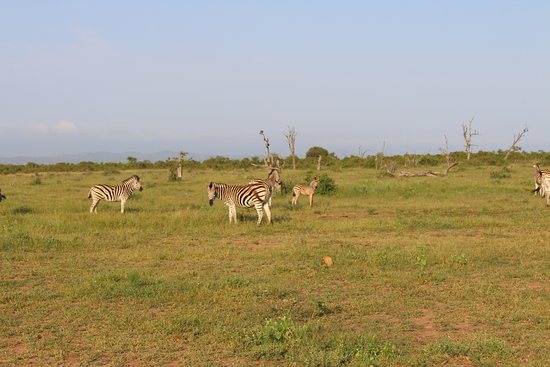 Lukimbi Safari Lodge: Great wildlife drives and views