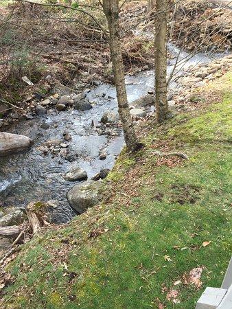 Roan Mountain Foto