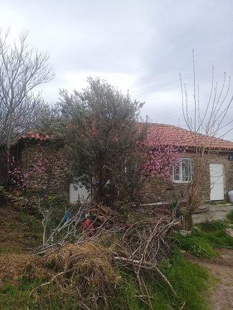 Sirince, Turkey: Tatlış köy evi