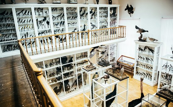 ‪E. Eversman's Zoological Museum‬