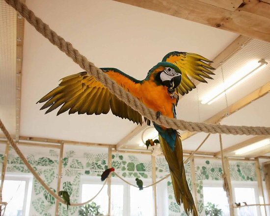 Papugarnia Koszalin
