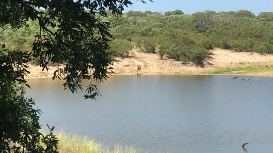 Ulusaba Private Game Reserve, Afrika Selatan: Watering hole to watch the Hippos