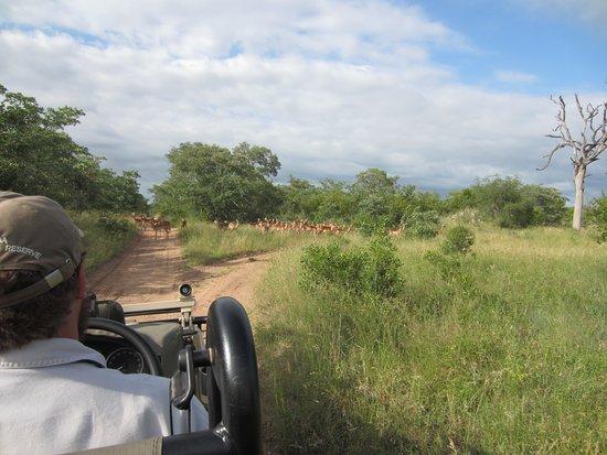 Частный заповедник Улусаба, Южная Африка: Out on drive
