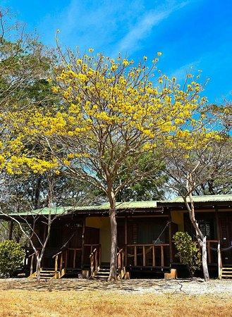 Manzanillo, Costa Rica: IMG-20180318-WA0003_large.jpg