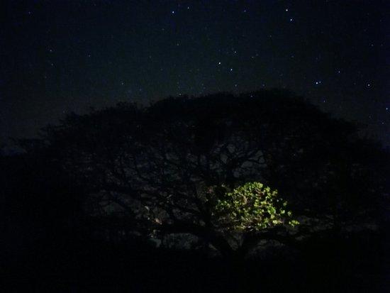 Manzanillo, Costa Rica: IMG_20180318_002355_large.jpg