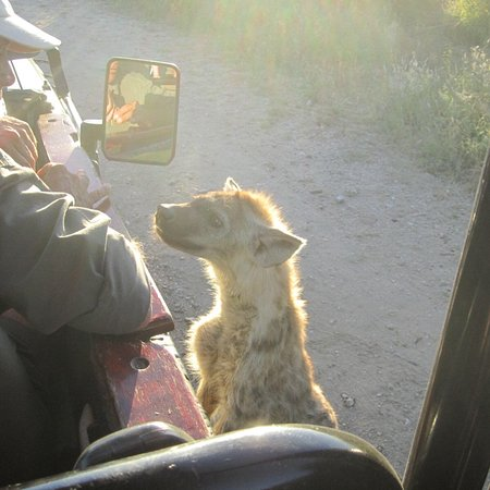 Jock Safari Lodge : photo4.jpg