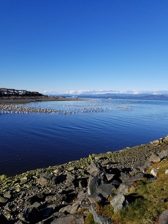 Parksville, Canadá: Judging by all the seagulls, we were witnessing a herring run!