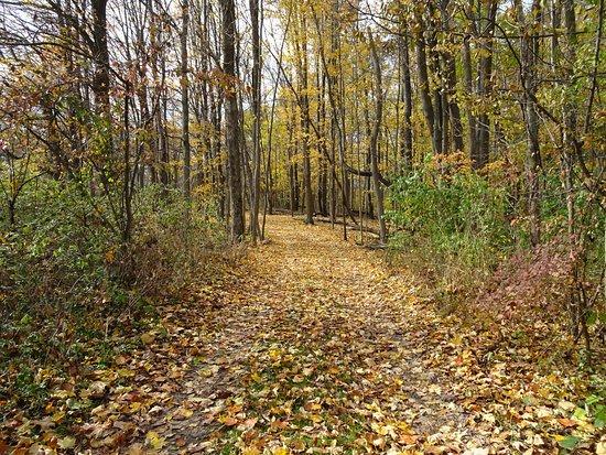 Niles, MI: Fall Color Hiking 5