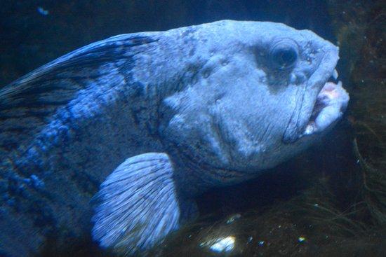 Brynsiencyn, UK: Blooming Ugly Fish