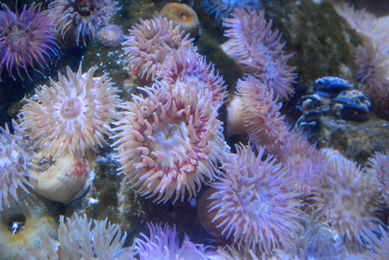 Brynsiencyn, UK: Underwater Flower Bed