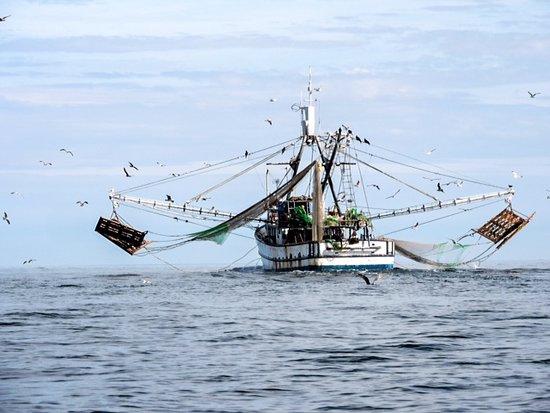 Magdalena Bay Whales: Shrimp boat?
