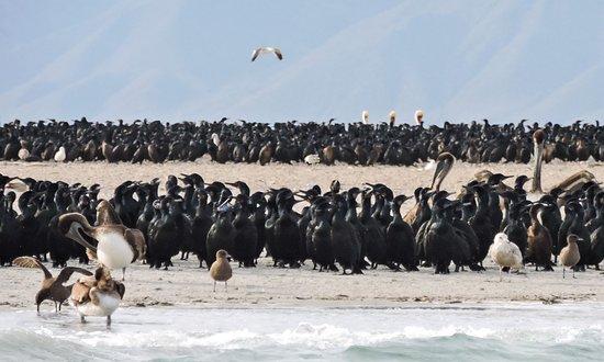 Magdalena Bay Whales: Bird island