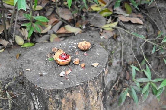 Провинция Сабарагамува, Шри-Ланка: Nutmeg