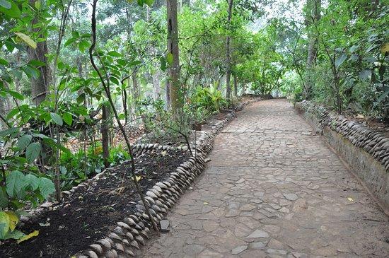 Sabaragamuwa Province, Sri Lanka: Garden