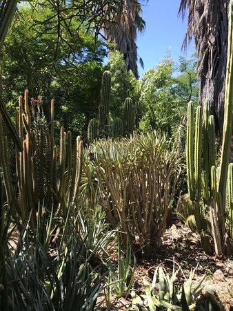 Interesting plants everywhere