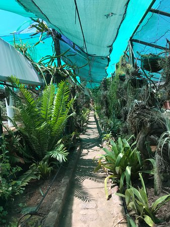 The cacti nursery