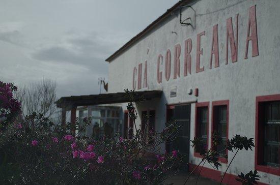 Gorreana Tea Plantation: From the parking lot