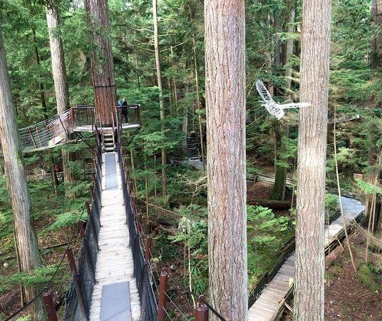 North Vancouver, Kanada: Tree top adventure park