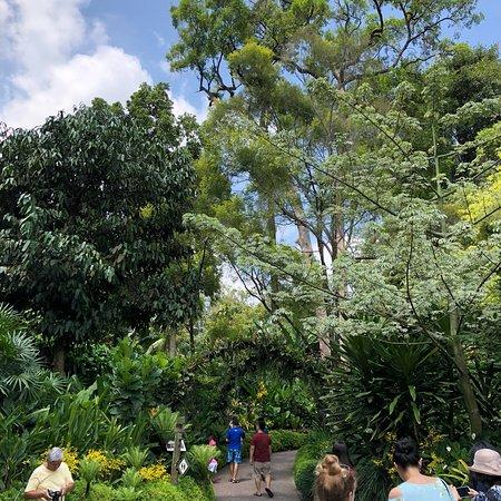 Singapore Botanic Gardens: photo4.jpg