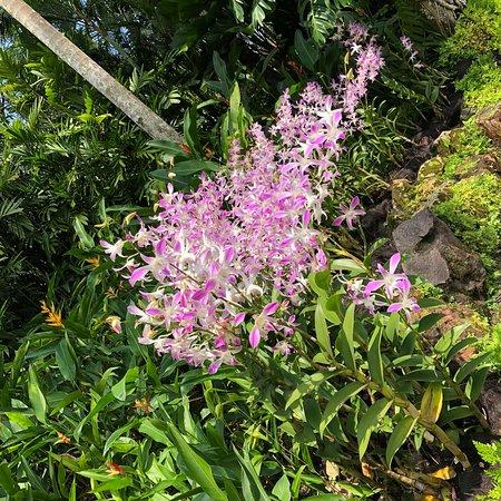 Singapore Botanic Gardens: photo5.jpg