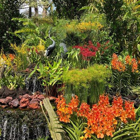 Singapore Botanic Gardens: photo6.jpg