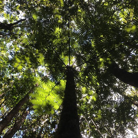 Yate, Новая Каледония: photo0.jpg