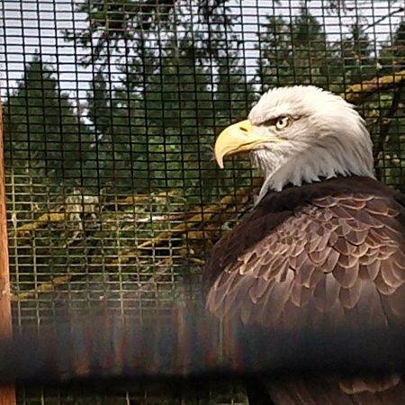 Cascades Raptor Center: IMG_20180318_162858_269_large.jpg