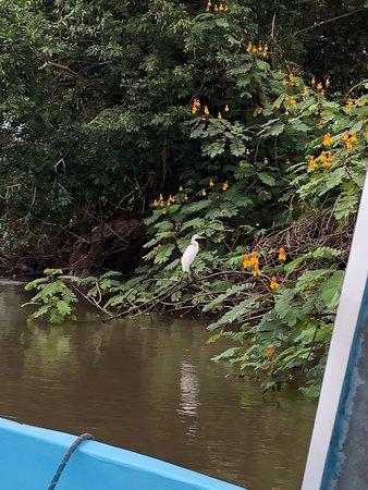 Cano Negro, Kosta Rika: avistemiento de aves