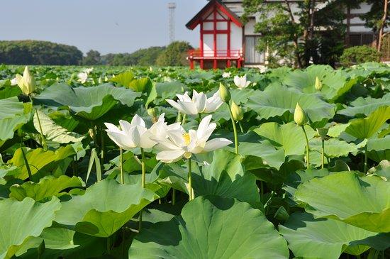 Komizugaike Pond