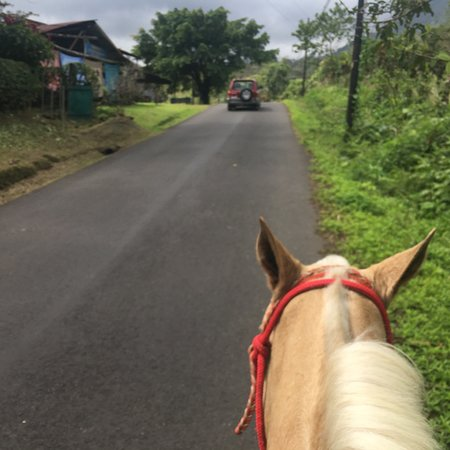 Alberto's Horses: photo2.jpg