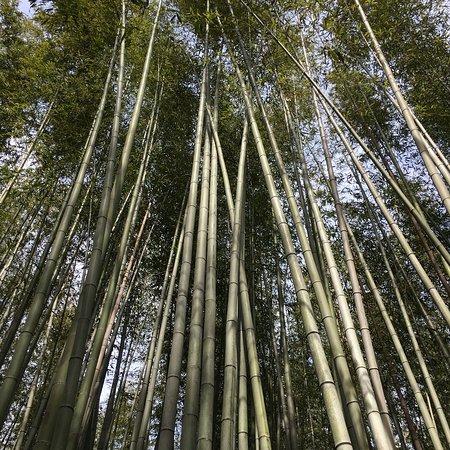 Arashiyama: photo1.jpg