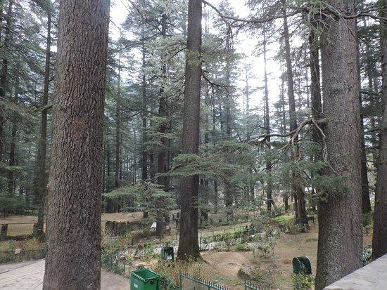Hidimba Devi Temple: Surrounding area of the temple.