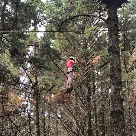 Tree Adventures: photo1.jpg