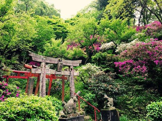 Dazaifu, Japan: 参道 ツツジの季節