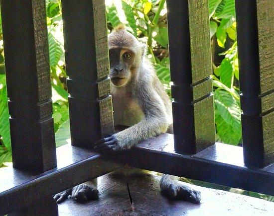 Pulau Gaya, Μαλαισία: Keep your doors shut!
