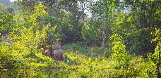 Provincia de Prachuap Khiri Khan, Tailandia: IMG-20180319-WA0000_large.jpg