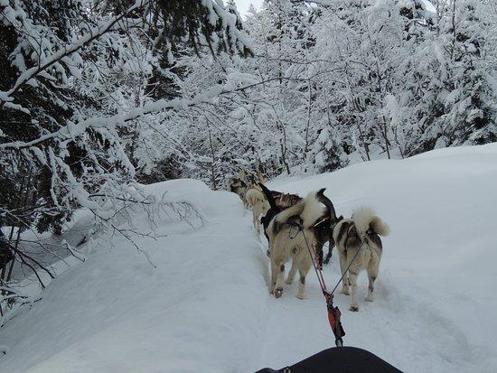 Aillon-le-Jeune, Francia: Magnifique balade en forêt avec les chiens sous la neige !