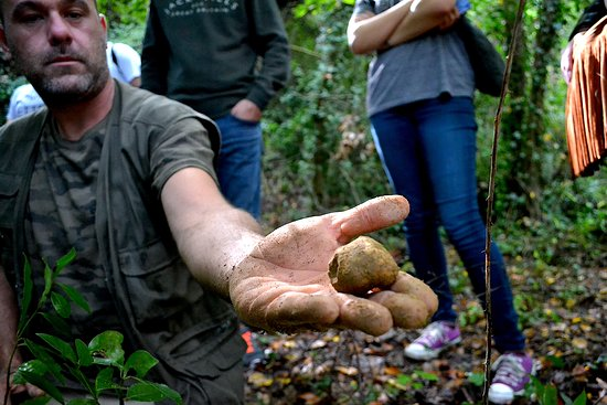 The Truffle Hunter: Valter a professional truffle hunter and a great white precious truffle