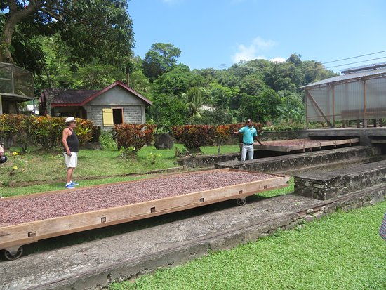 Belmont, Grenada: Drying the beans