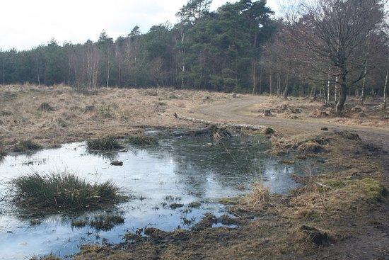 Ede, Nederland: Het landschap is afwisselend.