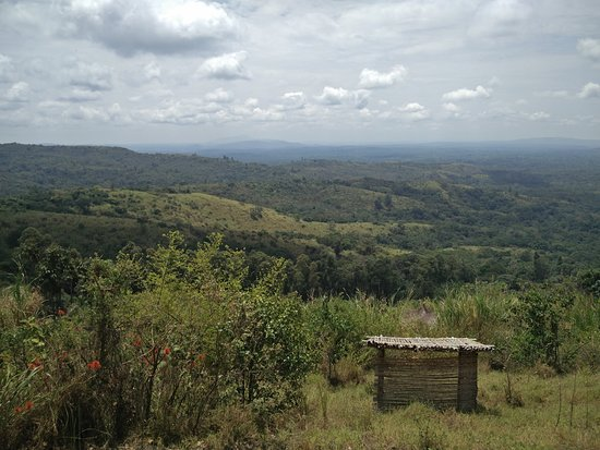 Kibale National Park, أوغندا: View from room